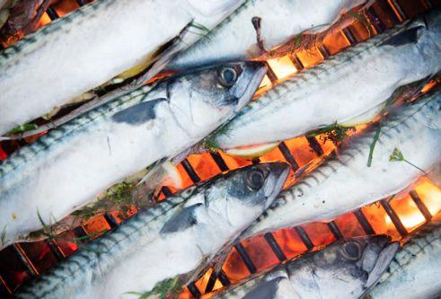 Pressebilled - fisk
